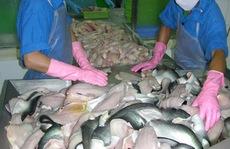 Tiếp tục kiểm tra 100% cá tra đi Mỹ