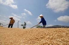 Giữ nguyên chỉ tiêu xuất khẩu nông sản năm 2020