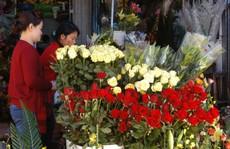 Hoa Đà Lạt sẽ tăng giá mạnh dịp lễ 20-11