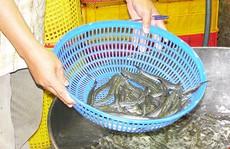 Cá và khô cũng nhiễm chất cấm