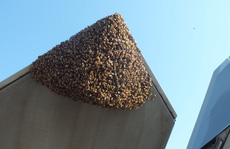 Mỹ: Siêu chiến đấu cơ F-22 Raptor bị 20.000 con ong 'dìm' xuống đất