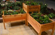 Những vườn rau đẹp mê mải dành cho mọi nhà