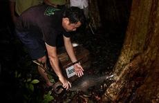 33 cá thể tê tê quý hiếm được thả về rừng