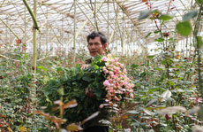 'Mua vàng còn dễ hơn mua hoa Đà Lạt'