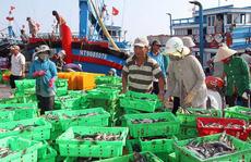 Ngư dân Ninh Thuận trúng mùa cá nục