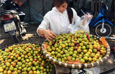 4.000 tấn mận Trung Quốc về Việt Nam mỗi năm
