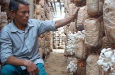 Từ người làm thuê trở thành chủ trang trại nấm tiền tỉ