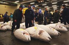 Cá ngừ triệu đô
