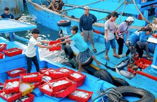 Chợ hải sản giá rẻ trên đảo Phú Qúy