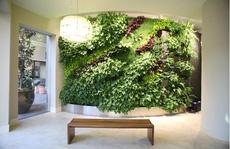 Tường xanh, xu hướng mới của cuộc sống hiện đại