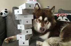 Quý tử đại gia giàu nhất Trung Quốc tậu 8 iPhone 7 cho... chó cưng