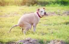 Ý tưởng 'độc' xử lý chó 'đi bậy' ngoài đường