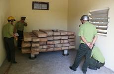 Ngỡ ngàng trước 2 kho gỗ ở Sở KH&CN Quảng Bình