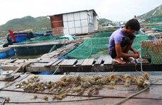 Ô nhiễm đe dọa nuôi trồng hải sản