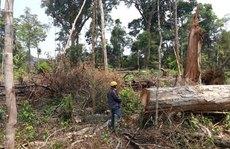 20.000 tỉ đồng chắc gì khôi phục được rừng?