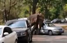 Thất tình, voi đập phá 15 chiếc xe để 'giải khuây'
