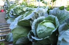 Nữ giảng viên dỡ mái nhà để trồng đủ loại rau sạch
