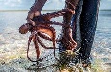 Những người săn bạch tuộc ở Zanzibar