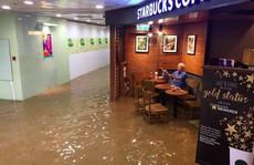 Hồng Kông phát cuồng vì cụ ông ngồi quán cafe giữa nước lụt