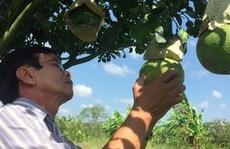 Trái cây tạo hình sẽ khan hàng