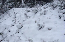 Tuyết phủ trắng miền Tây xứ Nghệ như ở Châu Âu