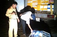 Bắt xe tải chở 6,5 tấn hải sản chết từ Quảng Bình ra Bắc tiêu thụ