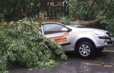 Cây to đổ đè bẹp taxi Hoàn Kiếm trong bão số 1