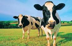 Nếu mua và giữ cổ phiếu VNM, nông dân sẽ 'khỏe' cỡ nào?