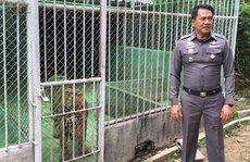 Thái Lan rà soát hàng loạt sở thú sau vụ 40 xác hổ trong chùa