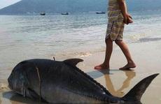 Hội Nghề cá: Không có cơ sở cá chết do thủy triều đỏ