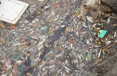 Phó Thủ tướng yêu cầu làm rõ nguyên nhân cá biển chết bất thường