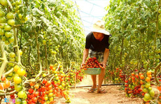 Anh em 9X kiếm tiền tỉ mỗi năm nhờ nông trại rau sạch