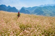 Mùa cao nguyên đá nở hoa