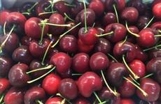Ma trận quả cherry: Hàng Tàu 'đột lốt' Mỹ, Canada...
