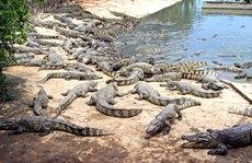 Khóc ròng vì cá sấu