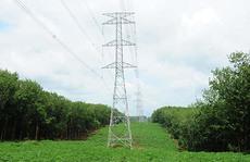 PTC4: Nỗ lực bảo vệ hành lang an toàn lưới điện cao áp