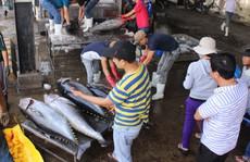 Tư thương ép giá cá ngừ?