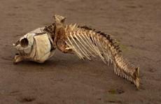 'Vùng biển chết' bí ẩn xâm lấn vào Đông Nam Á