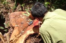 Trùm buôn gỗ lậu Hà 'đen' sa lưới thế nào?