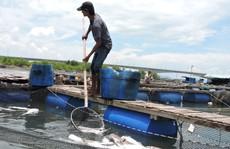 Người dân khẳng định cá chết do nước thải của nhà máy