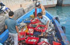 Nguyên nhân cá nuôi chết hàng loạt ở Lý Sơn là do thời tiết