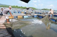 Vụ cá chết trên sông Chà Và: 12 doanh nghiệp chưa đền bù