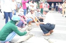 Vũng Tàu: Người dân mang cá chết ra chặn Quốc lộ 51