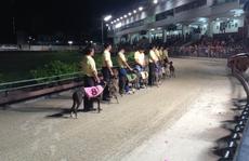 Chớp thời cơ mở trường đua ngựa
