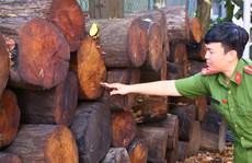 'Cõng' gỗ quý khỏi rừng, ông Hổ bị phạt 150 triệu đồng