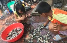 TP Vũng Tàu: Sau mưa lớn, dân bắt được cá hơn 5 kg