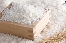 Trải nghiệm gạo Nhật Japonica