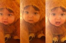 Tiếng gầm của 'sư tử nhí' đáng yêu hút 23 triệu lượt xem