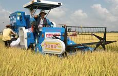 Đi Campuchia học… trồng lúa