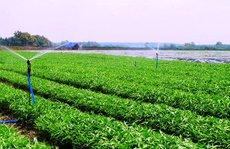 Loạn giá rau hữu cơ: Hàng rau sạch bóc mẽ nhau